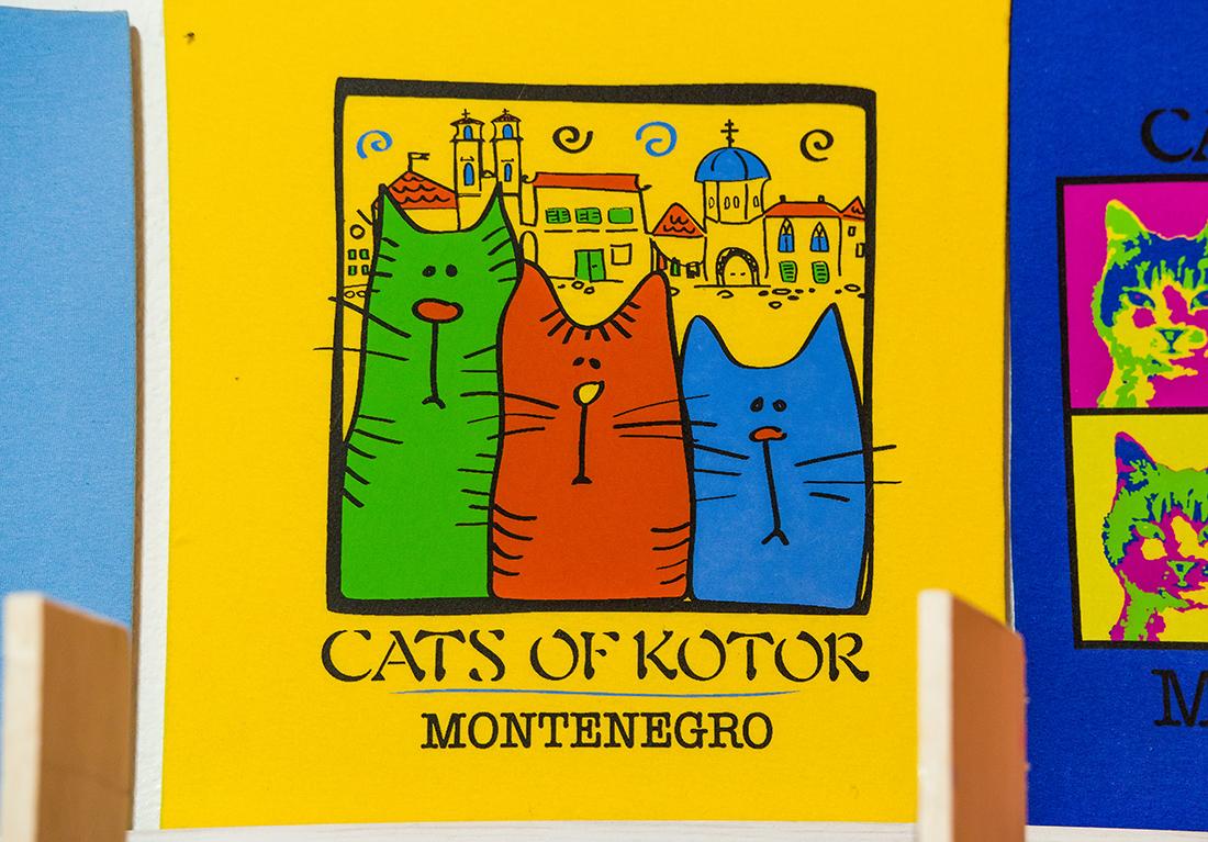 Удивительная история кошек из Котора.