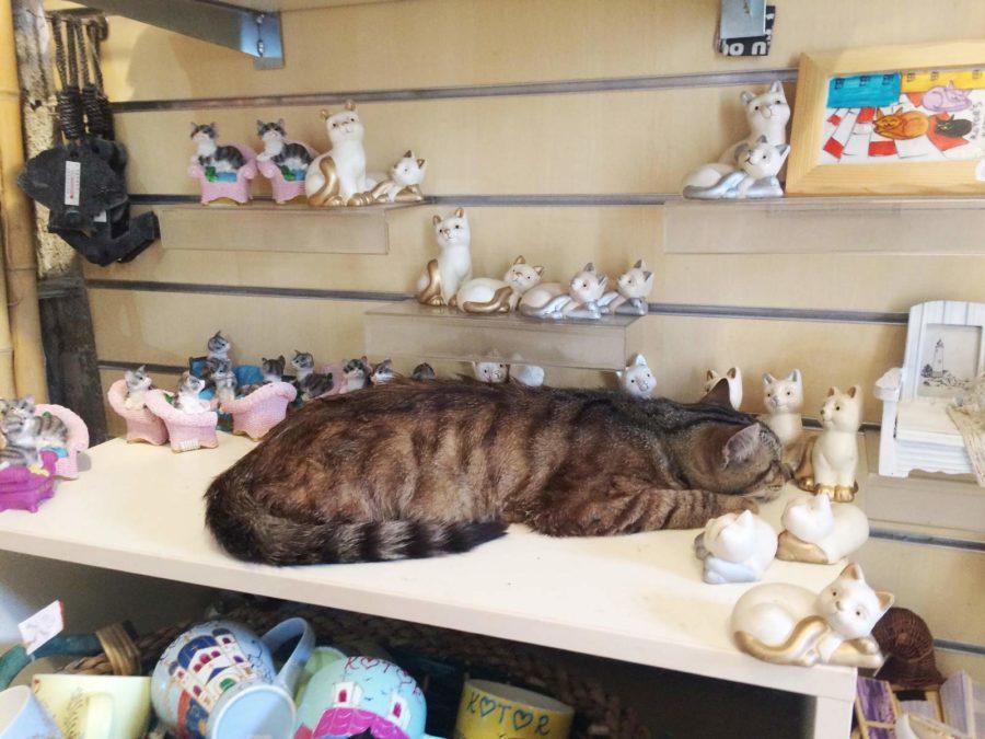 Сувениры из Черногории кошки из котора